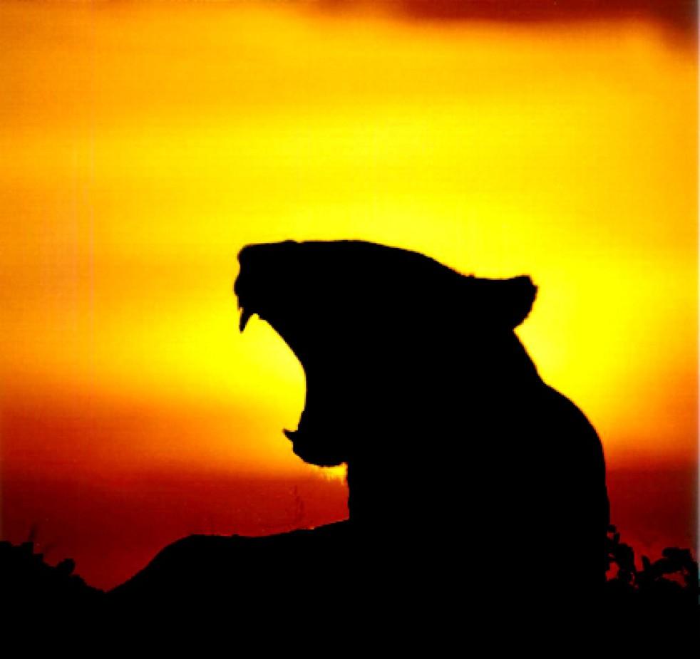 cropped-lioness-2001-thomas-r-wilke.jpg
